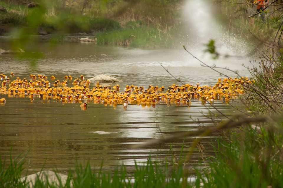 arthur-lions-duck race