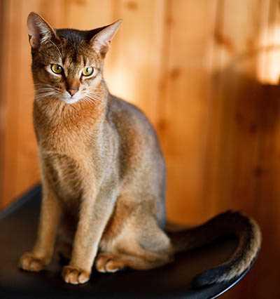 Cat--Nurture Pet Solutions Markdale